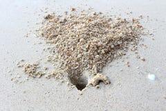 Krabbenloch auf dem Strandsand Stockbild