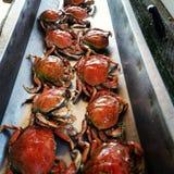 Krabbenreinigung stockbilder