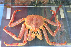 Krabbor för Taraba havskonung i fiskmarknaden Arkivbilder