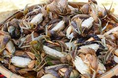 Krabbor i den Hoi An marknaden Royaltyfria Foton