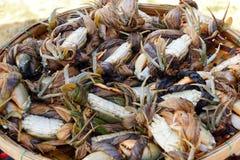 Krabbor i den Hoi An marknaden Royaltyfria Bilder