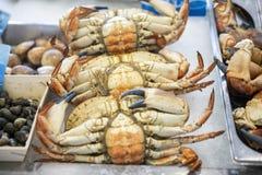 Krabbor på buken för fiskmarknad upp arkivfoto