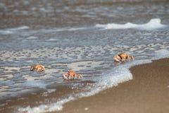 krabbor på kusten Arkivfoton