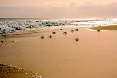 Krabbor på stranden Royaltyfri Foto