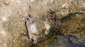 Krabbor på stranden arkivfilmer