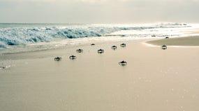 Krabbor på stranden Arkivbild