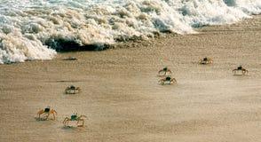 Krabbor på stranden Royaltyfria Bilder