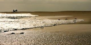 Krabbor på stranden Arkivbilder
