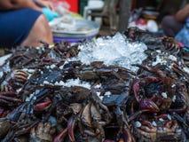Krabbor på is, Thailand Arkivbild