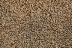 Krabbor som gräver hål som hem skapar och dumpar små gyttjabollar royaltyfri fotografi