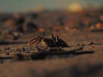 krabbor väntar nära strandsanden royaltyfri fotografi