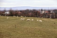 Krabbt gräs betar med några vita får vid den avlägsna staden arkivbilder