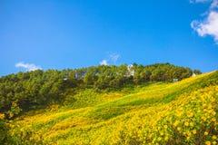 Krabbt gult blommafält med band och krabbt abstrakt landskap Royaltyfria Bilder