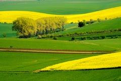 Krabbt ängvårlandskap i södra Moravia Royaltyfri Bild