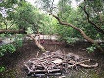 Krabhuis in mangrovebos in Rayong, Thailand stock afbeelding