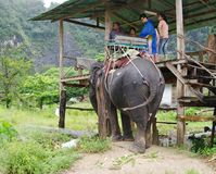KRABI,泰国- 2013年10月28日:游人在迁徙的大象去 库存照片