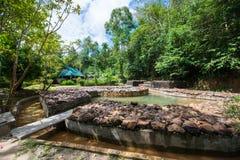 Krabi, Таиланд - 10-ое октября 2016: горячие источники складывают вместе на горячем spri Стоковые Изображения