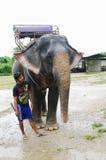 KRABI, TAILANDIA - 28 DE OCTUBRE DE 2013: Elefante en arnés y mahout joven del muchacho Fotografía de archivo