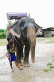 KRABI, THAILAND - OCTOBER 28, 2013: Elephant in harness and young boy mahout Stock Photography