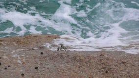 krabvlucht van golven op stenen stock videobeelden