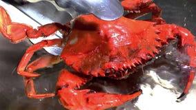 Kraby gotują się w gorącej wodzie na niecce obraz royalty free