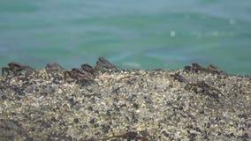 Kraby na skale przy plażą zbiory
