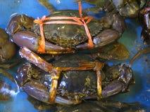 Kraby przy owoce morza rynkiem Obraz Stock