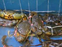 Kraby przy owoce morza rynkiem Fotografia Royalty Free