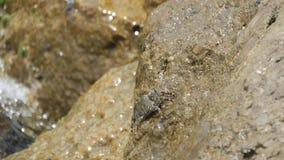 Kraby siedzą na kamieniu przy plażą z tocznymi fala zbiory