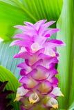 Krachai kwiat Fotografia Royalty Free
