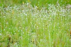 Kradumngen kwiat w phataem park narodowy Obraz Royalty Free