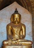 Kraftig guld- Buddha med starka skuldror och tung head medita Royaltyfri Foto