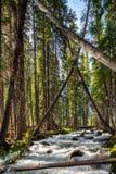 Kraftig liten vik vrålar till och med lutande träd i en skog Royaltyfri Bild