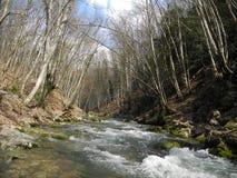 Kraftig solig vår i bergskogen Arkivbilder