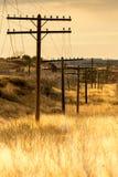Kraftledning på wood poler som kör till och med guld- fält Fotografering för Bildbyråer