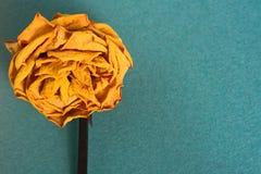Kraftpapier-document met ruimte voor tekst en bloemknoppen droge geel nam toe Stock Afbeelding