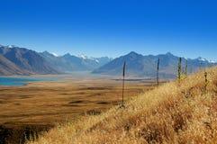 krajów łubiny Mackenzie Zdjęcie Royalty Free