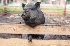 Krajów zwierzęta r w ekologicznie życzliwych warunkach z opieką i miłością Obraz Stock