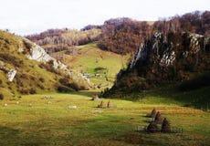 Kraj jesieni krajobraz z kolorowym lasem i łąkami w Carpathians zdjęcie royalty free
