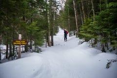 Kraj narciarka na śladzie w drewnach zdjęcia royalty free