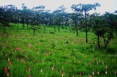 Krajeaw在PA HIN NGAM国家公园的花田 免版税库存照片