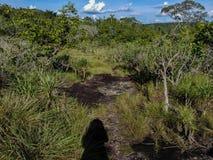 Krajobrazów drzewa i liście obraz stock