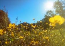 Krajobrazów kolorów lasu lata natury miastowy światło słoneczne Zdjęcia Royalty Free