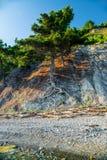 Krajobrazów kolorów lasu lata natury miastowy światło słoneczne Zdjęcie Royalty Free
