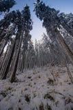 Krajobraz śnieżny zwarty las w góry Widok śnieżyste wysokie jodły i nieprzejezdni snowdrifts Zdjęcia Royalty Free