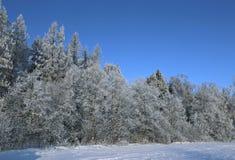 Krajobraz śnieżysty pole i drzewa jesteśmy świerkowi i brzozy fotografia royalty free