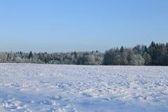 Krajobraz śnieżysty pole i drzewa jesteśmy świerkowi i brzozy zdjęcia stock