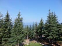 Krajobraz Zdjęcie Royalty Free