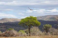 krajobraz afryki Obraz Stock