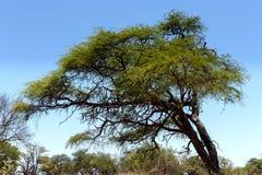 krajobraz afryki Obrazy Royalty Free